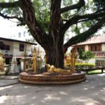 Buddha statues under the bodhi tree