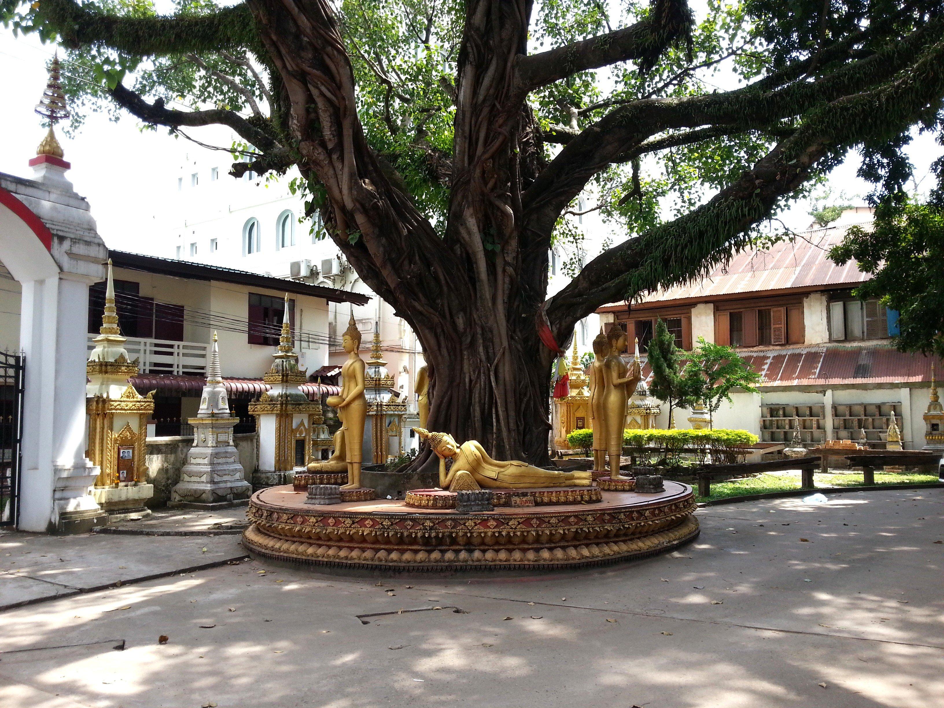 Buddha statues under the bodhi tree
